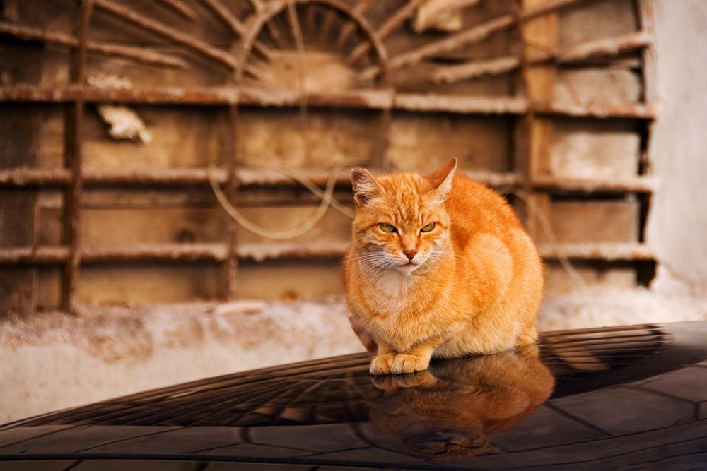 Rudy kot na dachu samochodu w rzymskiej uliczce