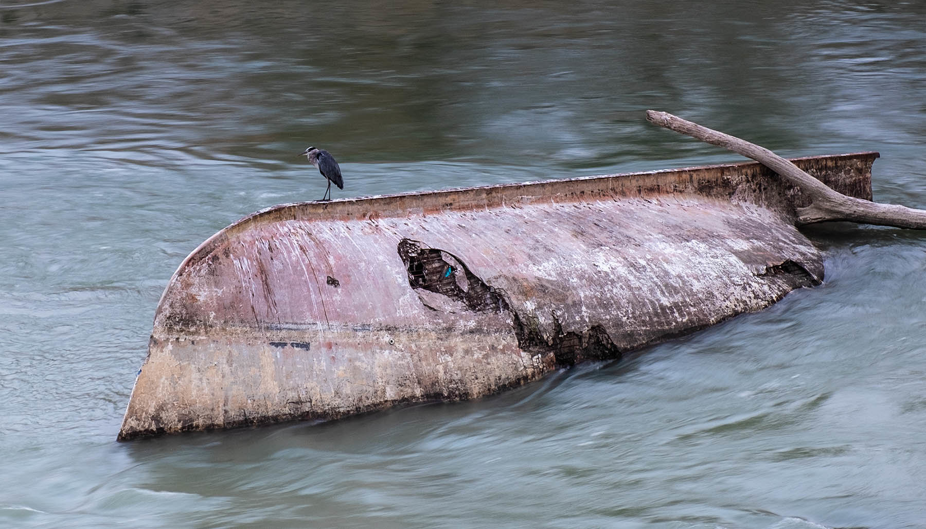 Zatopinoa łódź i czapla na rzece Tybr w Rzymie