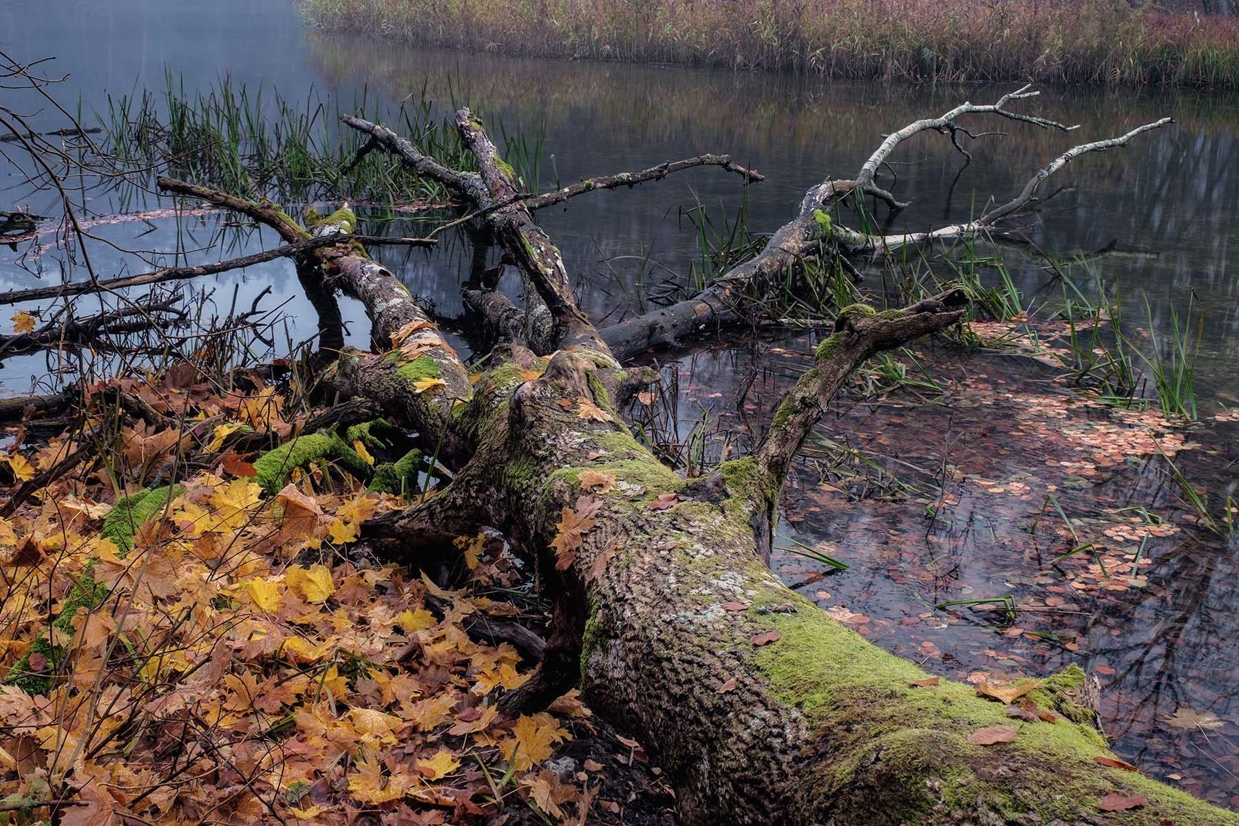 Jesienny pejzaż rzeki Krutyni na Mazurach.