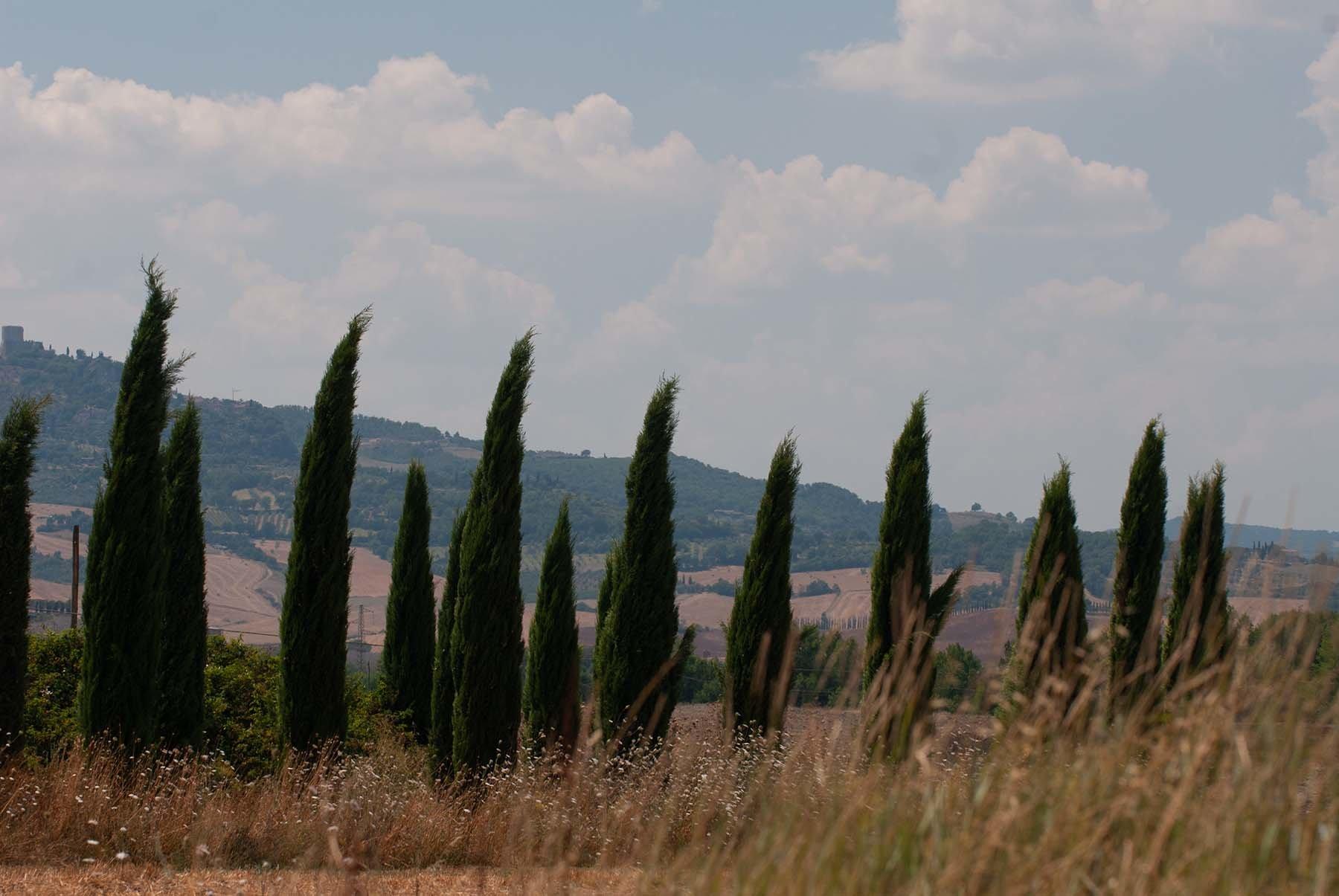 Wiejski krajobraz Toskanii z cyprysami