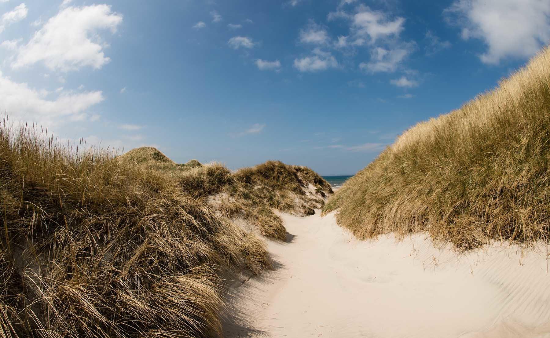 Wydmy na duńskiej plaży nad Morzem Północnym